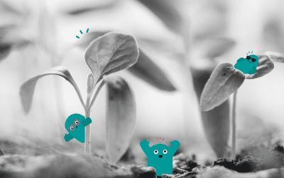 Kit de plantation biodégradable : le test