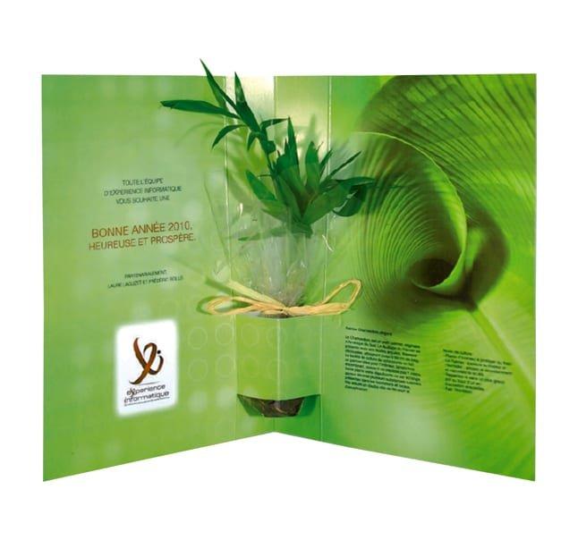 plante postale 2